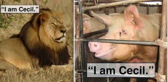 I am Cecil pic